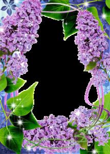 Lilac Transparent PNG PNG Clip art