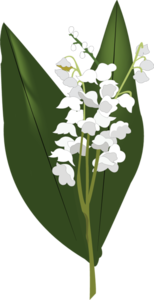 Lily of The Valley PNG HD PNG Clip art