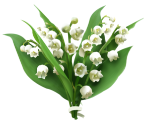 Lily of The Valley PNG Picture PNG Clip art