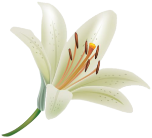 Lily PNG Clipart PNG Clip art