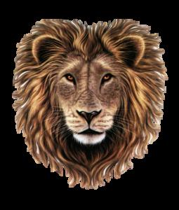 Lion Head PNG Clipart PNG Clip art