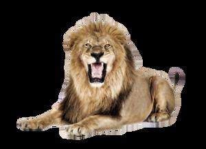 Lioness Roar PNG Pic PNG Clip art