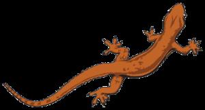 Lizard PNG File PNG Clip art