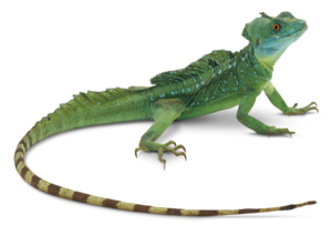 Lizard PNG Photos PNG Clip art