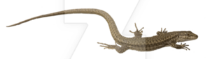 Lizard PNG Picture PNG Clip art