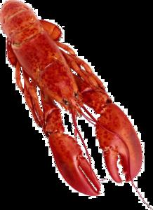 Lobster PNG Clipart PNG Clip art