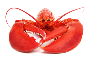 Lobster PNG Free Download PNG Clip art
