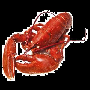 Lobster PNG Photos PNG Clip art