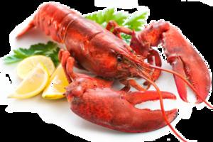 Lobster Transparent PNG PNG Clip art