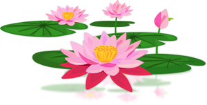 Lotus PNG Pic PNG Clip art
