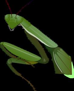Mantis PNG Clipart PNG Clip art