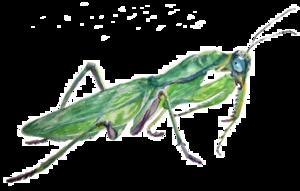 Mantis PNG Photos PNG Clip art