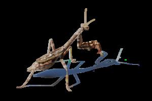 Mantis PNG Picture PNG Clip art