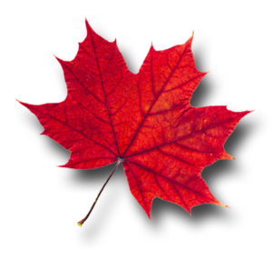 Maple Leaf PNG Pic PNG Clip art