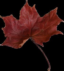 Maple Leaf PNG Transparent Picture PNG Clip art