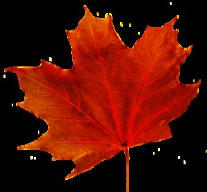 Maple Leaf Transparent PNG PNG Clip art