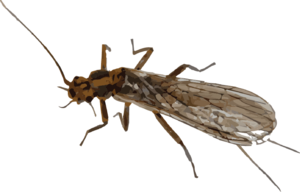 Mayfly PNG Transparent Image PNG Clip art