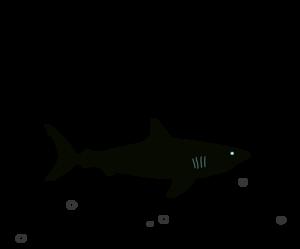 Megalodon PNG Picture PNG Clip art