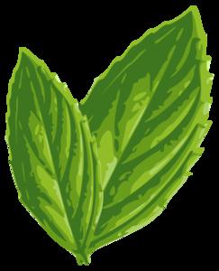 Mint PNG Image PNG Clip art