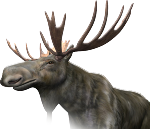 Moose PNG Image PNG Clip art