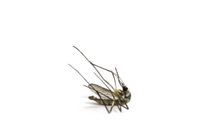 Mosquito PNG Image PNG Clip art