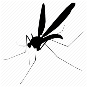 Mosquito PNG Picture PNG Clip art