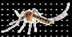 Mosquito Transparent Images PNG PNG Clip art