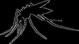 Mosquito Transparent PNG PNG Clip art
