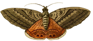 Moth Background PNG PNG Clip art