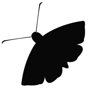 Moth Download PNG Image PNG Clip art