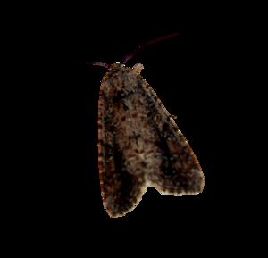 Moth PNG Background Image PNG Clip art