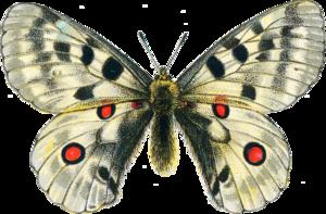 Moth PNG Clipart PNG Clip art