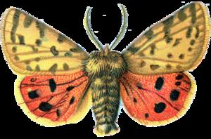 Moth PNG File PNG Clip art