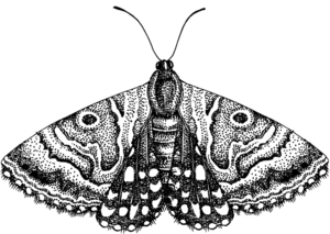 Moth PNG Free Download PNG Clip art