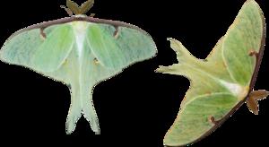 Moth PNG HD PNG Clip art