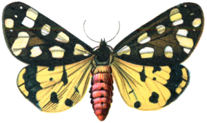 Moth PNG Image PNG icon