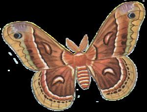 Moth PNG Photos PNG Clip art