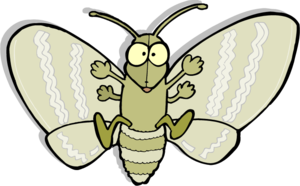 Moth PNG Picture PNG Clip art