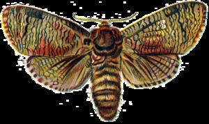 Moth PNG Transparent Image PNG Clip art