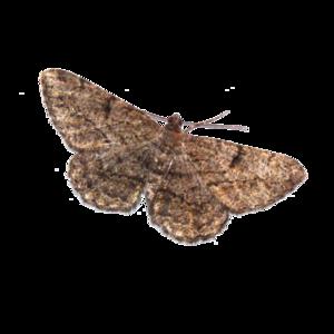 Moth PNG Transparent Picture PNG Clip art