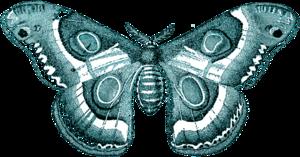 Moth Transparent PNG PNG Clip art