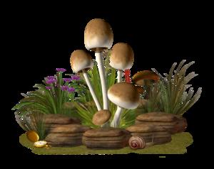 Mushroom PNG Transparent Image PNG Clip art