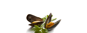 Mussel Download PNG Image PNG Clip art