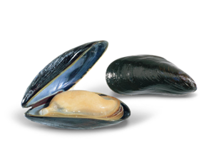Mussel PNG HD PNG Clip art