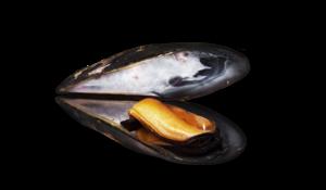 Mussel Transparent Images PNG PNG Clip art