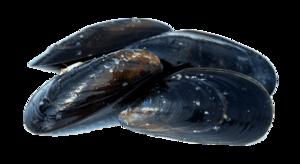 Mussel Transparent PNG PNG Clip art
