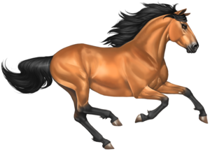 Mustang Horse PNG Image PNG Clip art