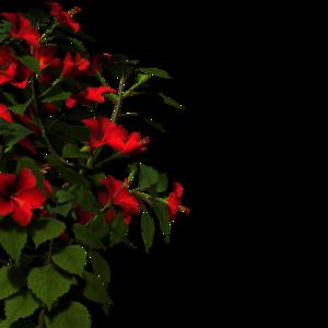 Nature PNG HD PNG Clip art