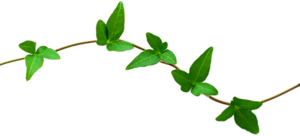Nature Transparent PNG PNG Clip art