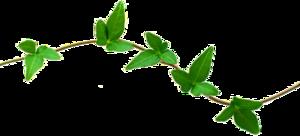 Nature Transparent PNG PNG Clip art